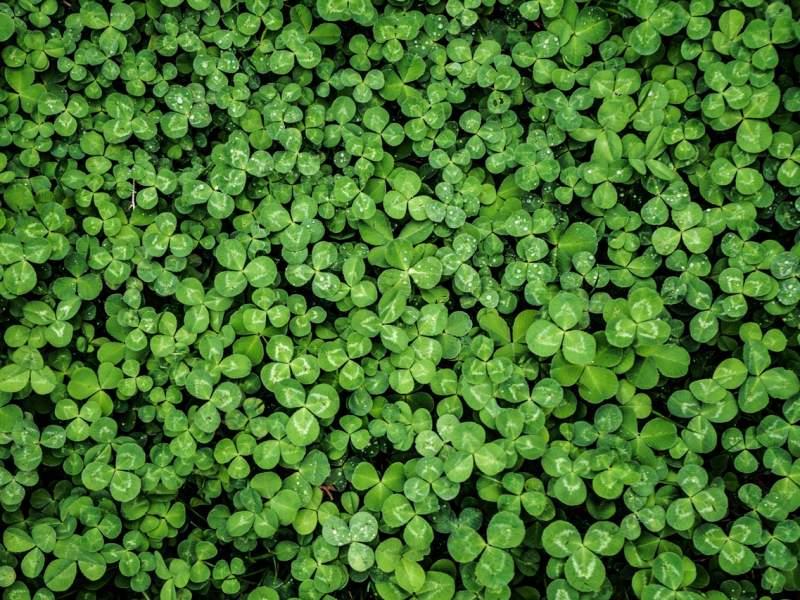 environment-flora-foliage-2537632